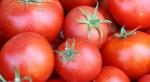 Tomat vegetarian
